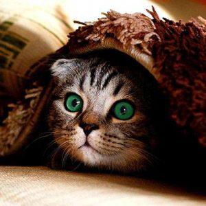 collier gps chat cache couverture