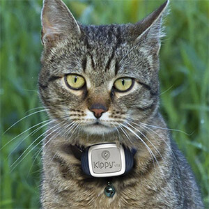 collier chat traceur